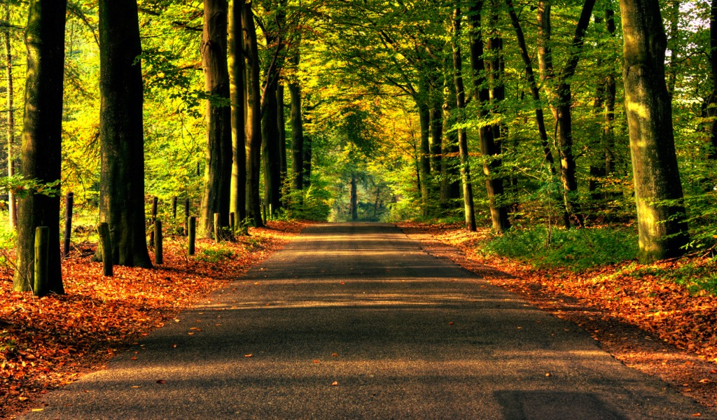 Road To Autumn Wallpaper Nature Wallpapers