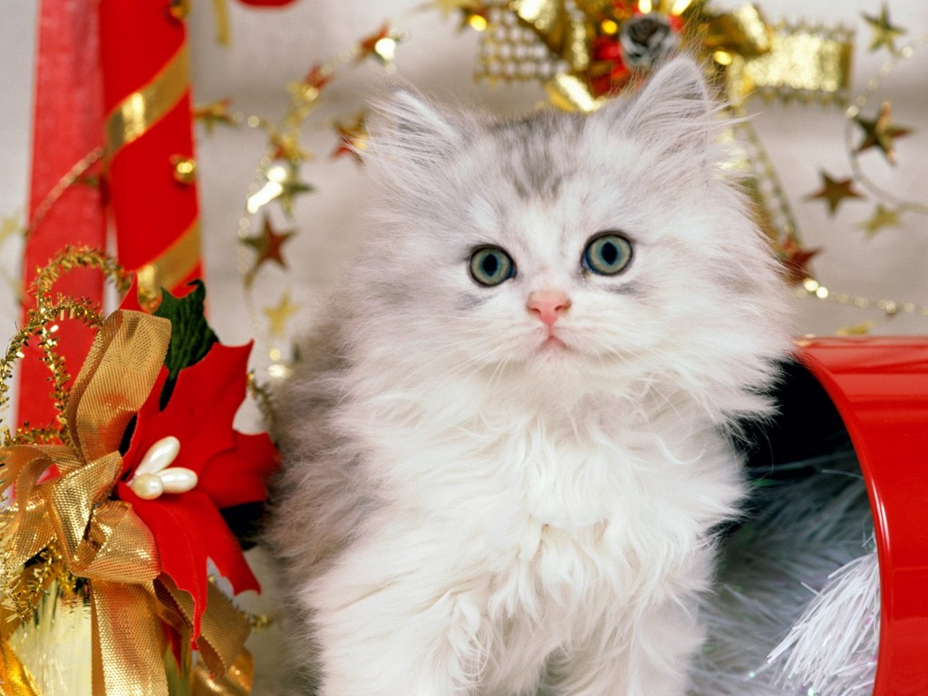 Christmas Kitten Wallpaper Cats Animals Wallpapers