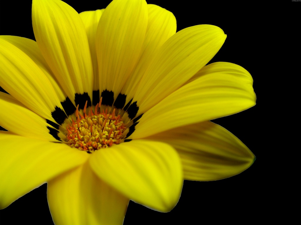 Great Yellow Flower Wallpapers In Jpg Format For Free Download