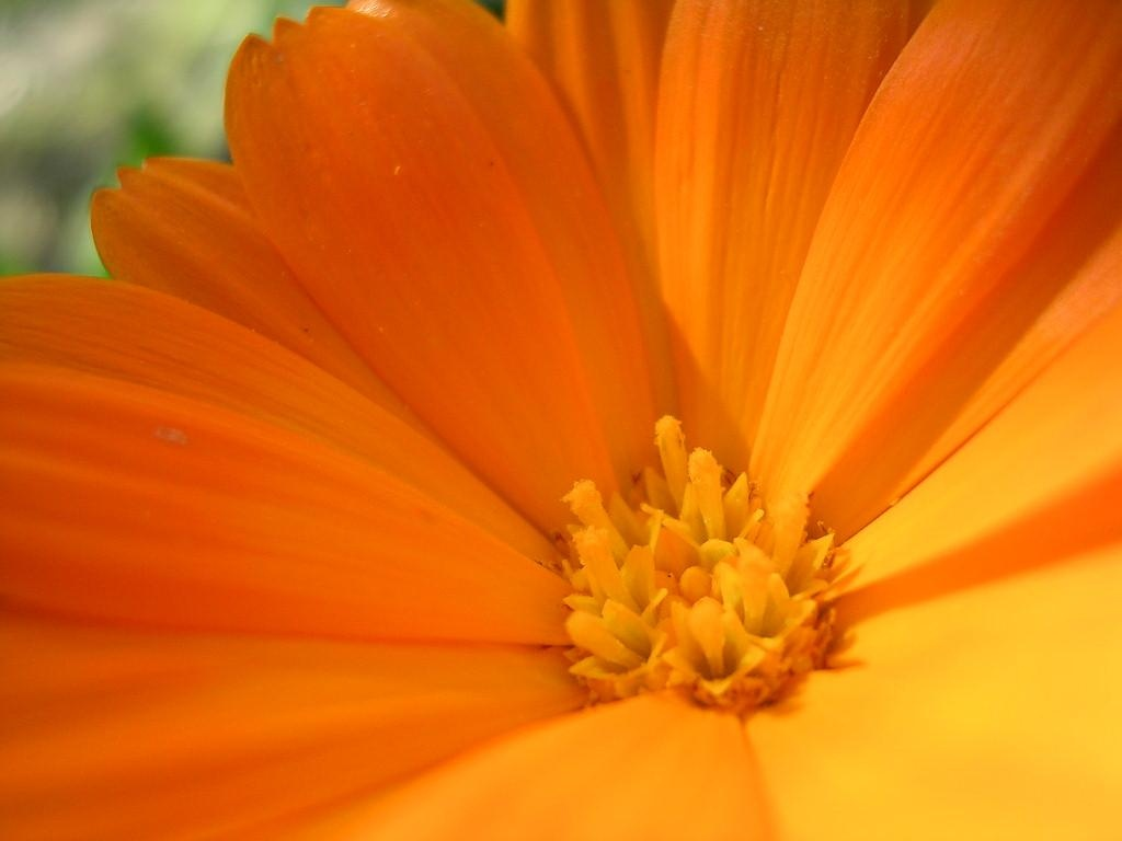 Lovely Yellow Flowers Wallpapers In Jpg Format For Free Download