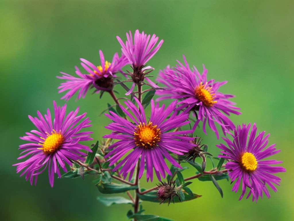 wallpapers flowers new  hd wallpapers, Natural flower