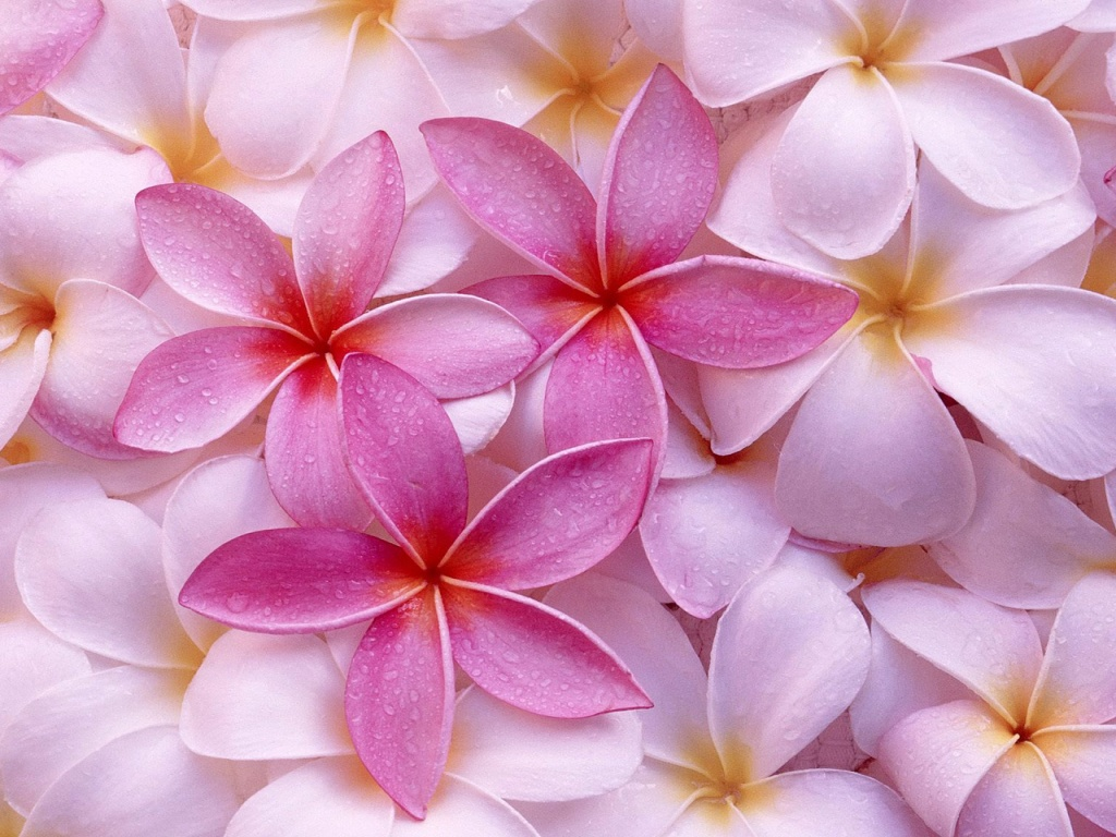 Pink Colors Wallpapers In Jpg Format For Free Download