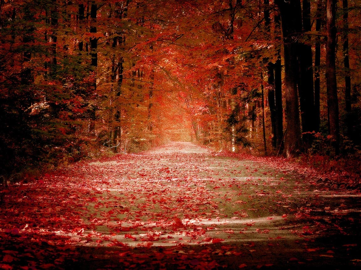 Autumn Road Wallpapers In Jpg Format For Free Download