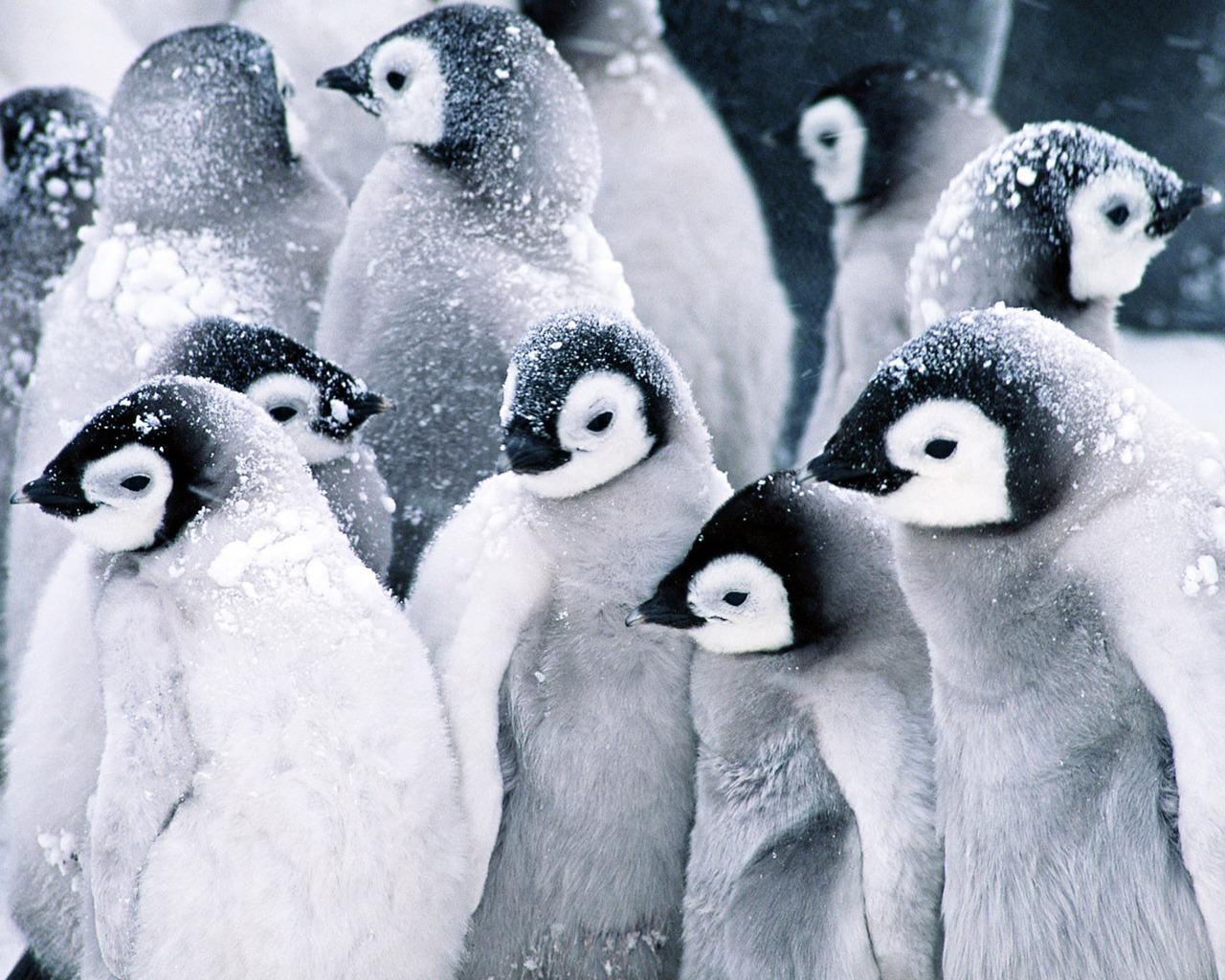 best Penguin Pictures images on Pinterest