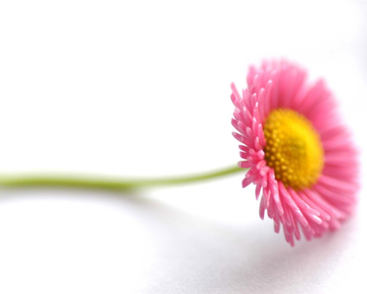 Beautiful flower wallpapers in jpg format for free download beautiful flower wallpapers izmirmasajfo