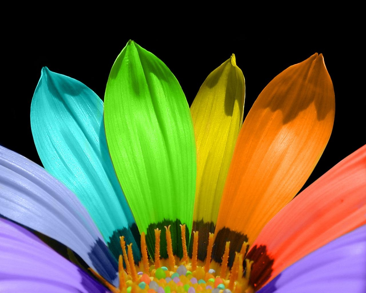 flower color petals wallpapers in jpg format for free download