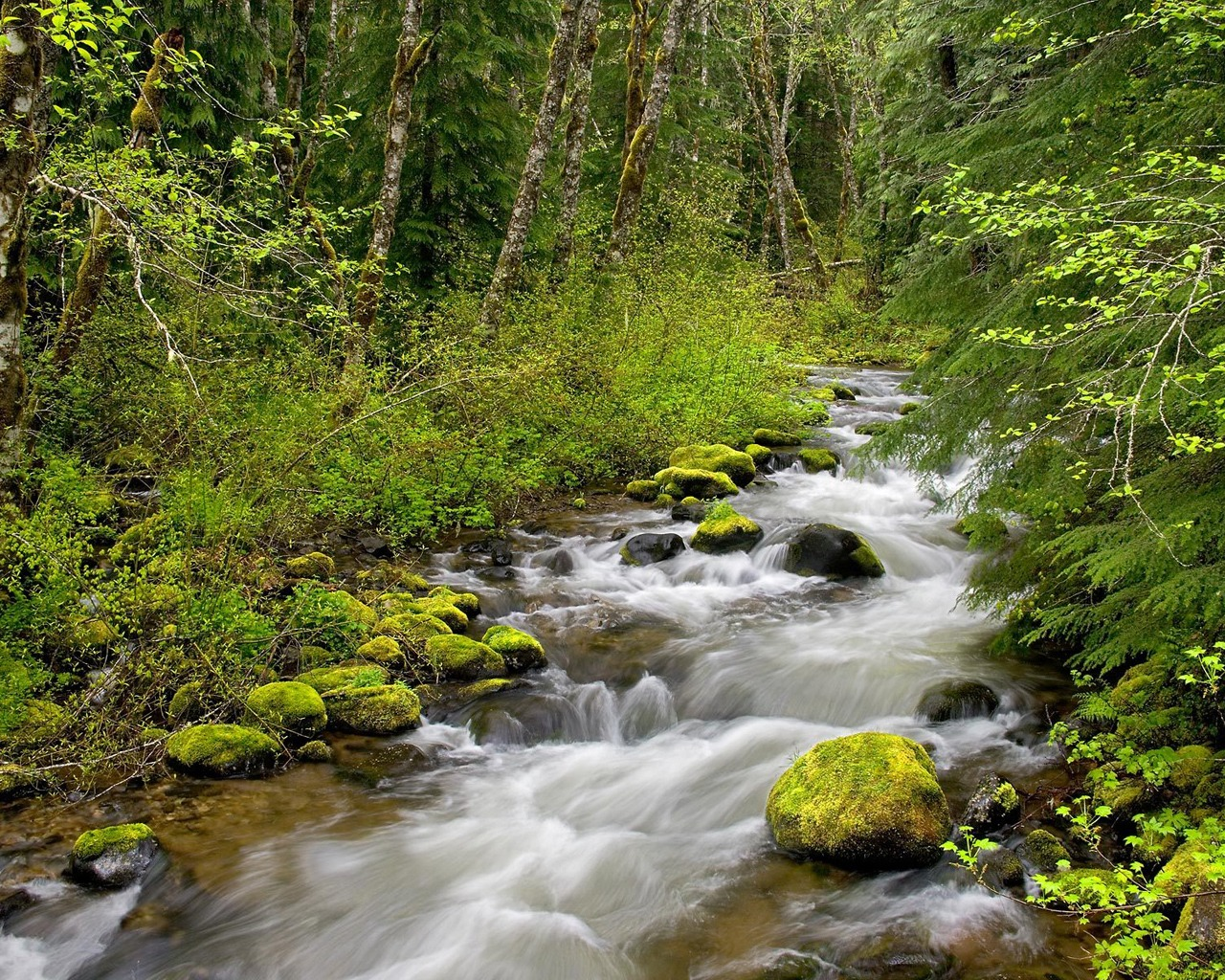 forest river wallpaper rivers nature wallpapers in jpg format for