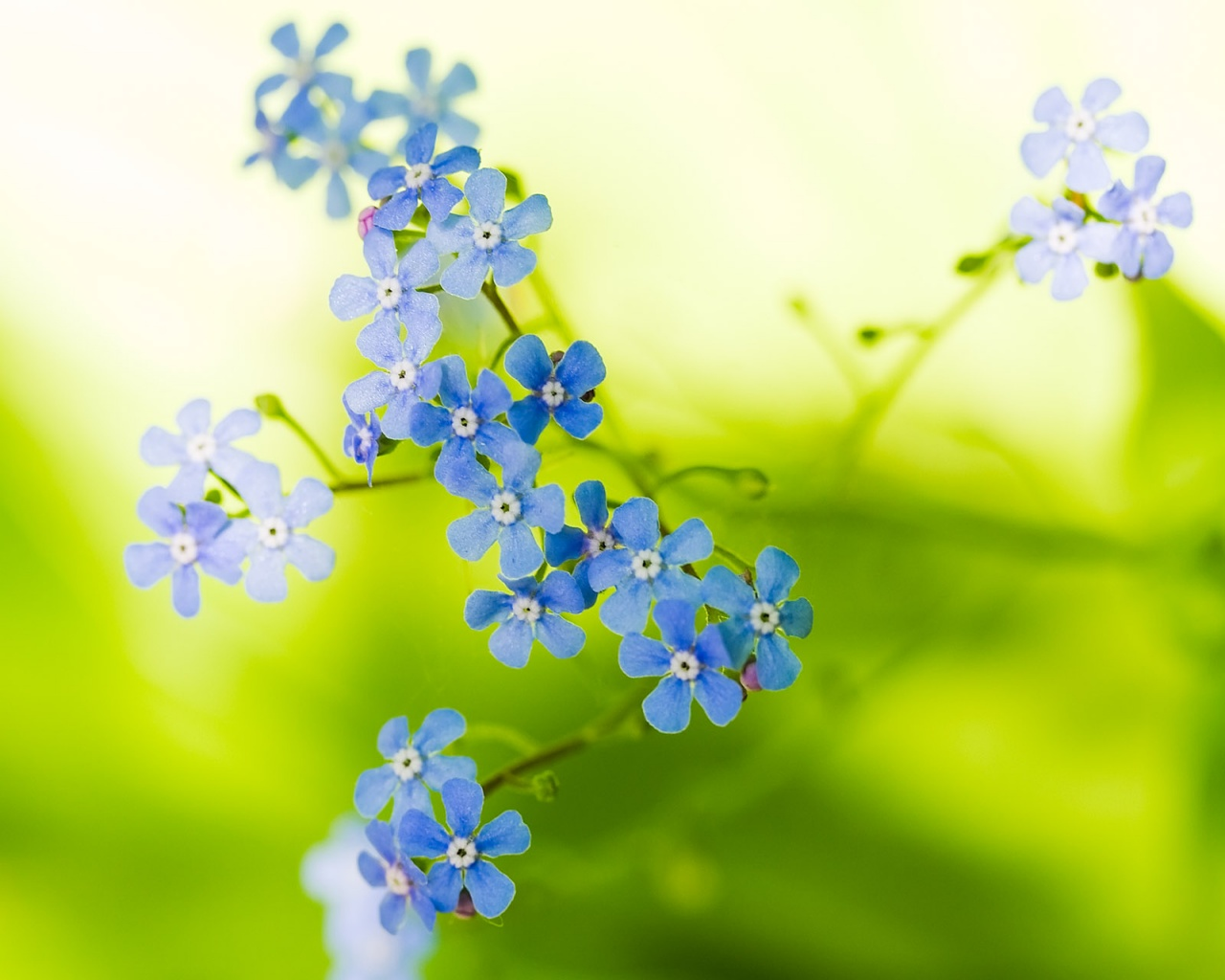 Green beautiful flowers wallpapers in jpg format for free download green beautiful flowers wallpapers izmirmasajfo
