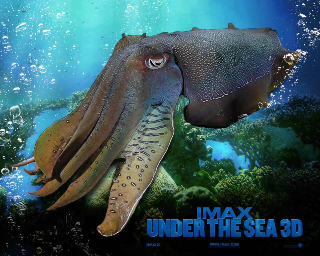 Imax Under The Sea 6 Wallpapers In Jpg Format For Free Download
