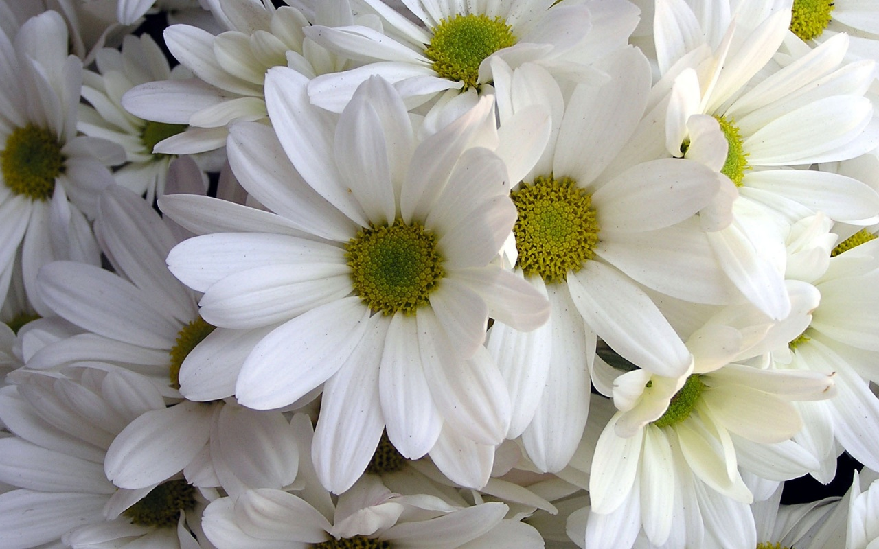 Free photos of white flowers rr collections.