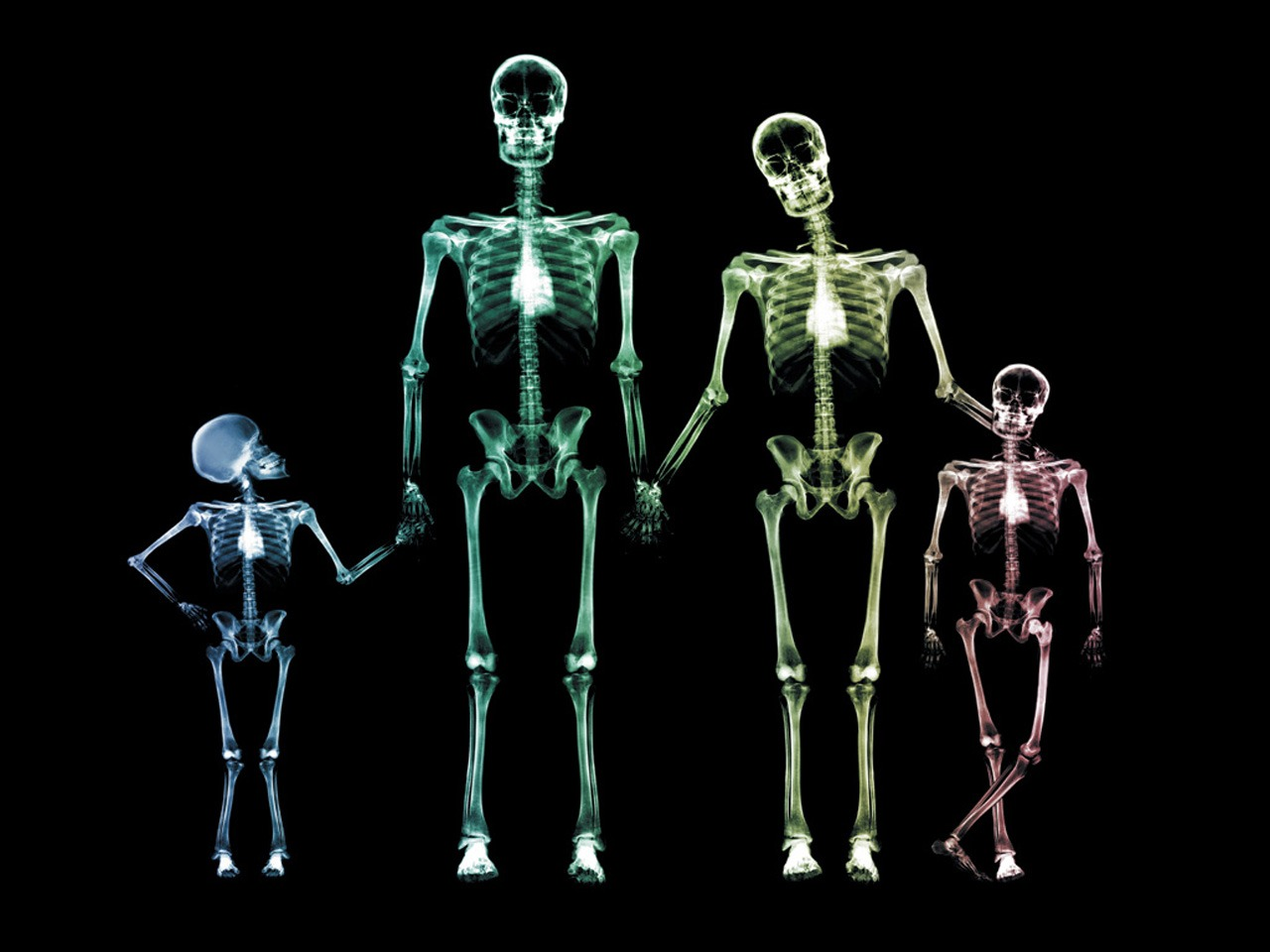 x ray family wallpaper x ray 3d wallpapers in jpg format for free