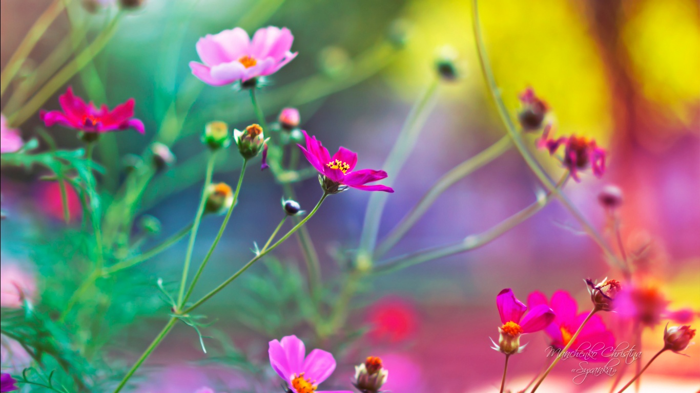 Amazing flowers wallpapers in jpg format for free download amazing flowers wallpapers voltagebd Gallery