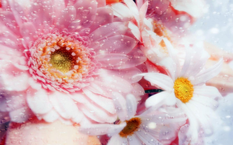 Dreams Pink Flowers Wallpaper Flowers Nature Wallpapers In Jpg