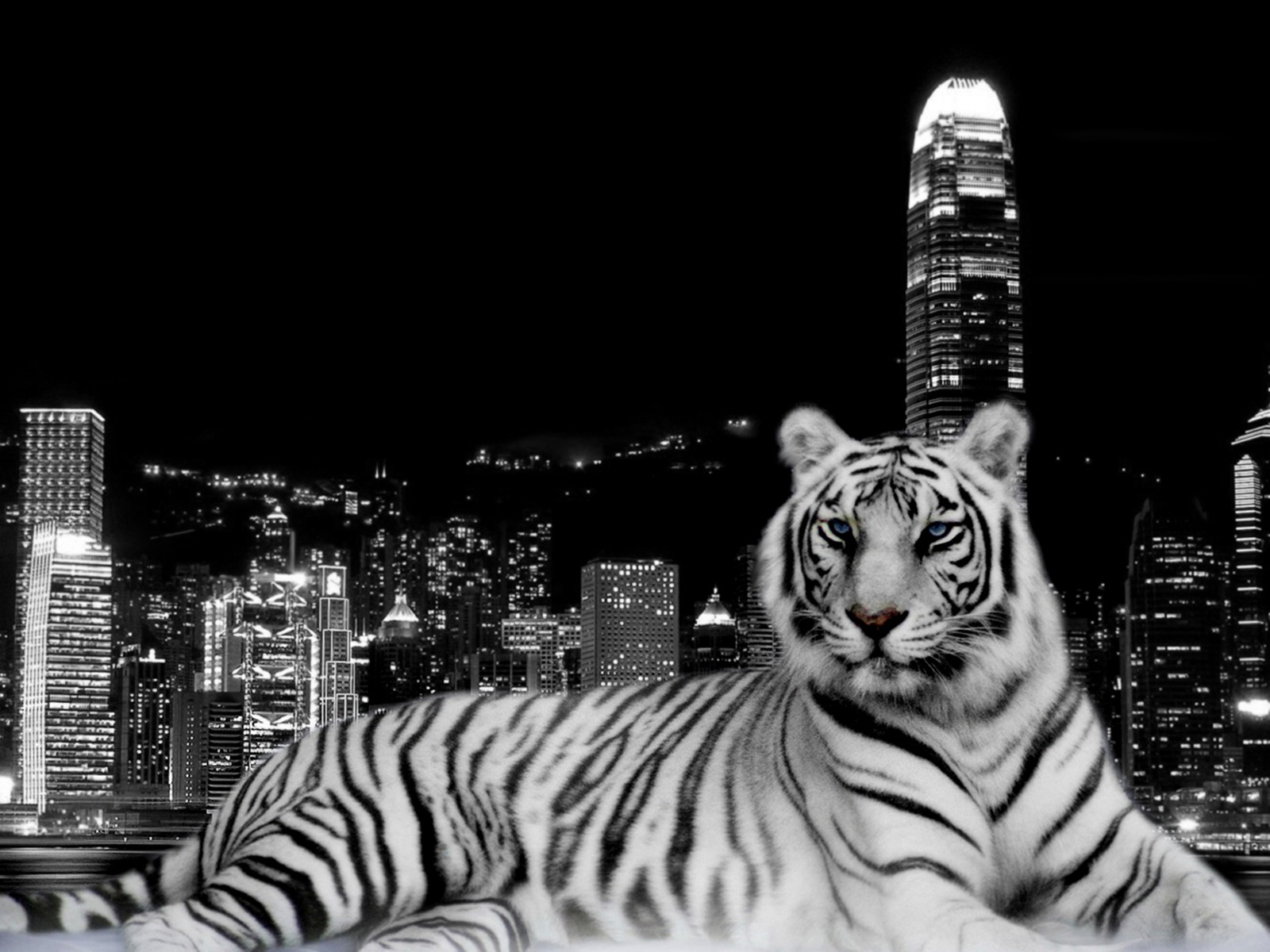 city tiger wallpaper tigers animals 380