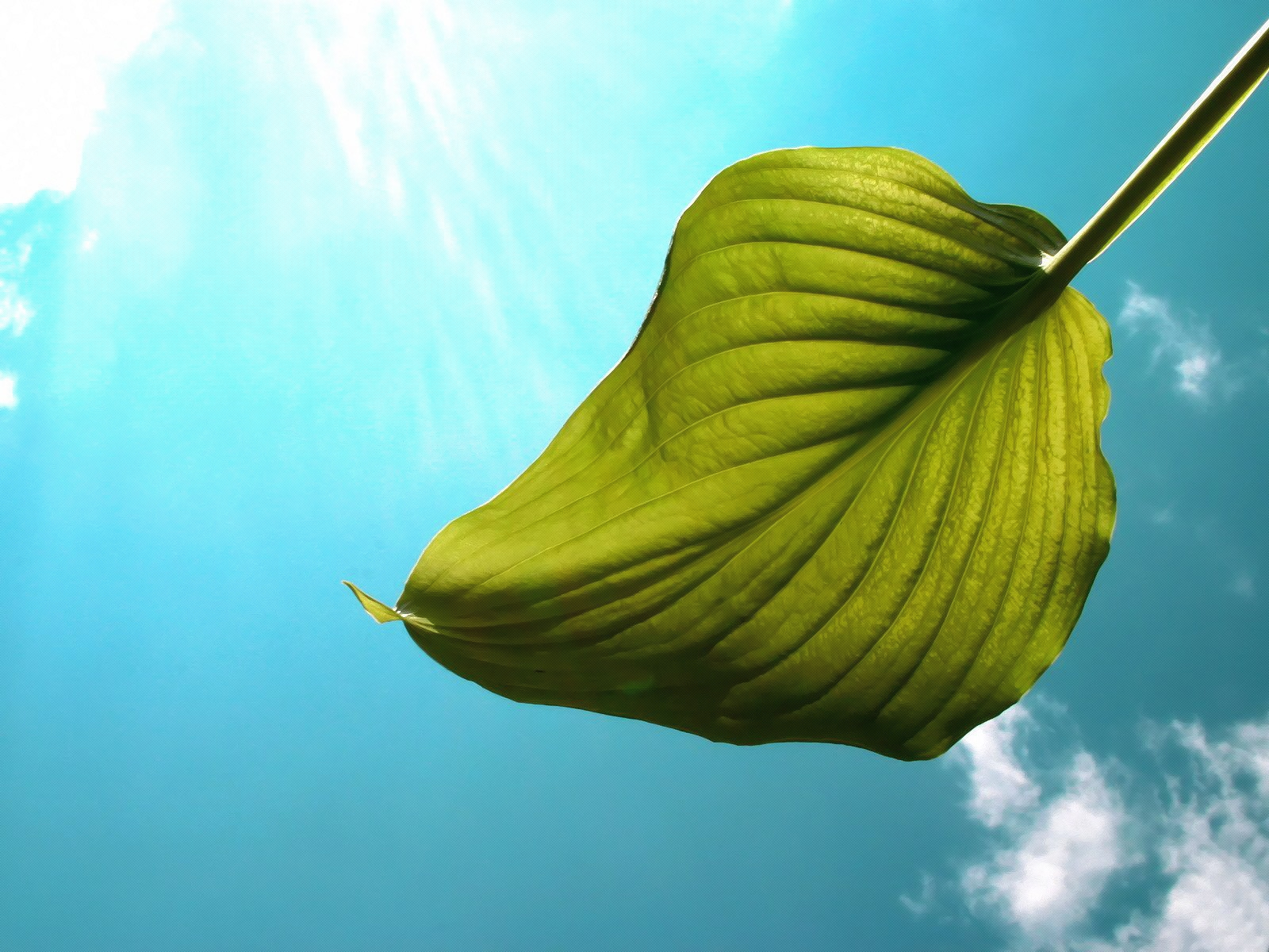 Flying Leaf Wallpaper Other Nature Wallpapers in jpg format for free