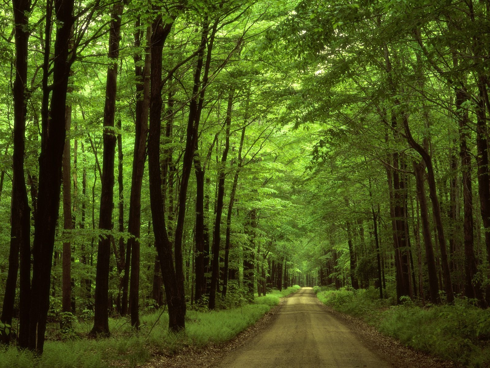 Forest Road Wallpaper Landscape Nature Wallpapers