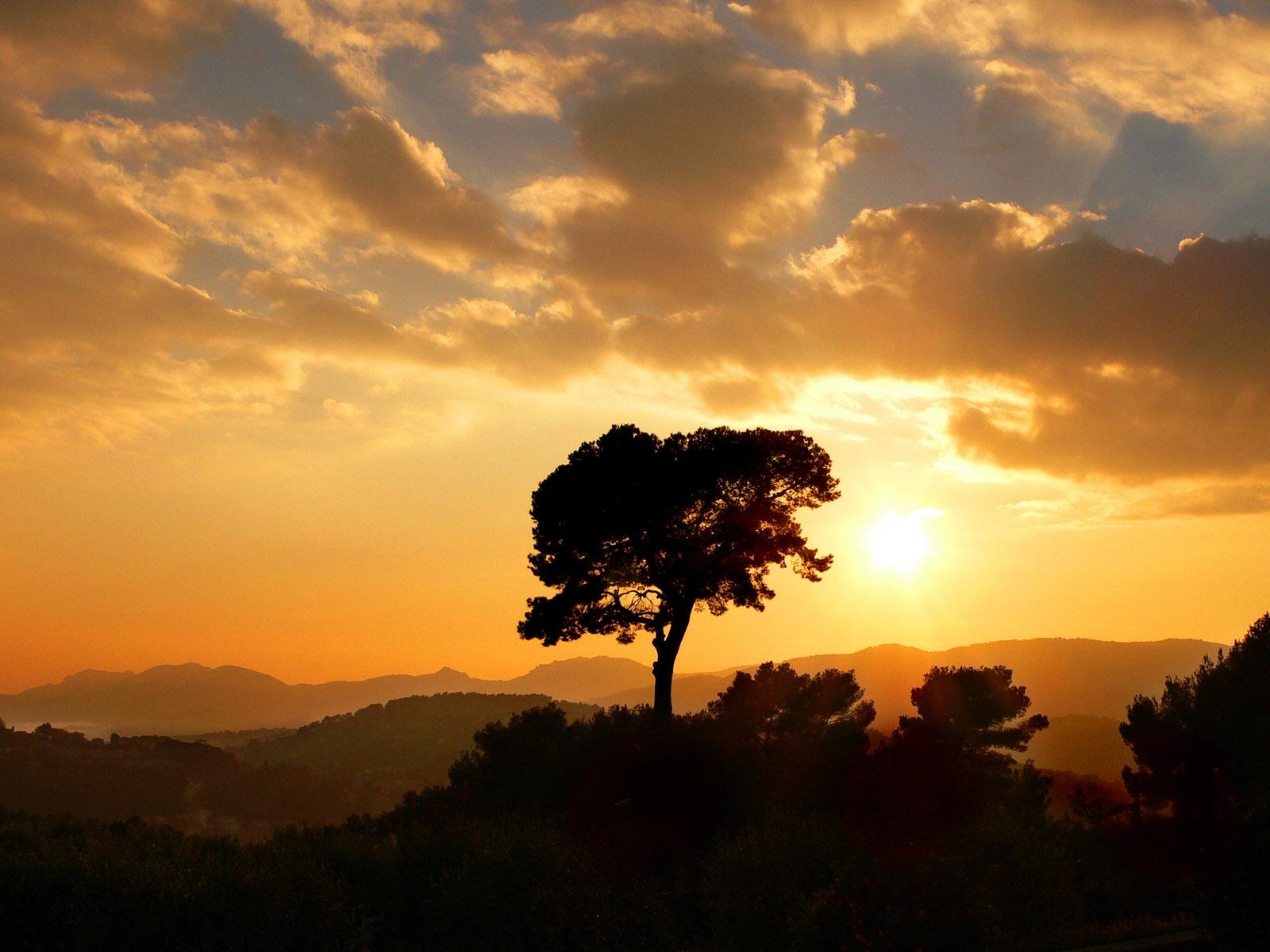 Wallpaper download download - Golden Tree Wallpaper Landscape Nature