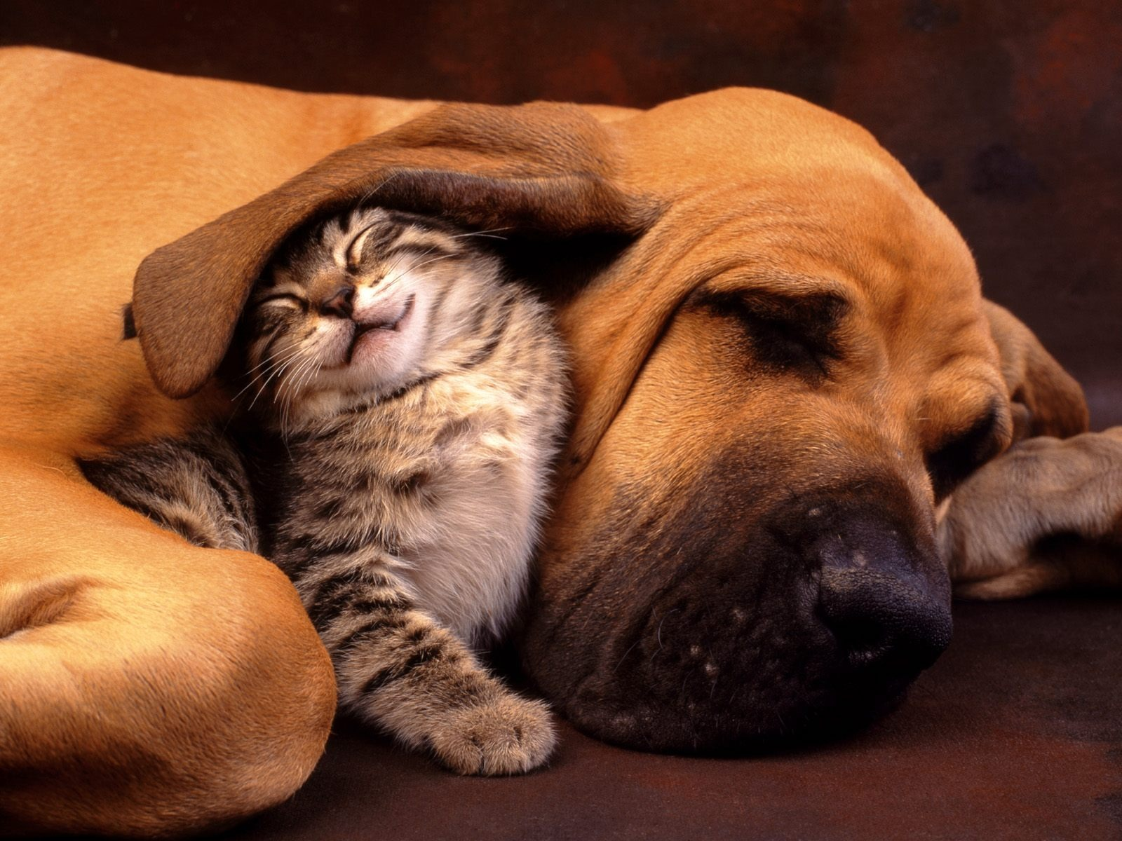 Cats Animals Wallpapers And Images Gallery