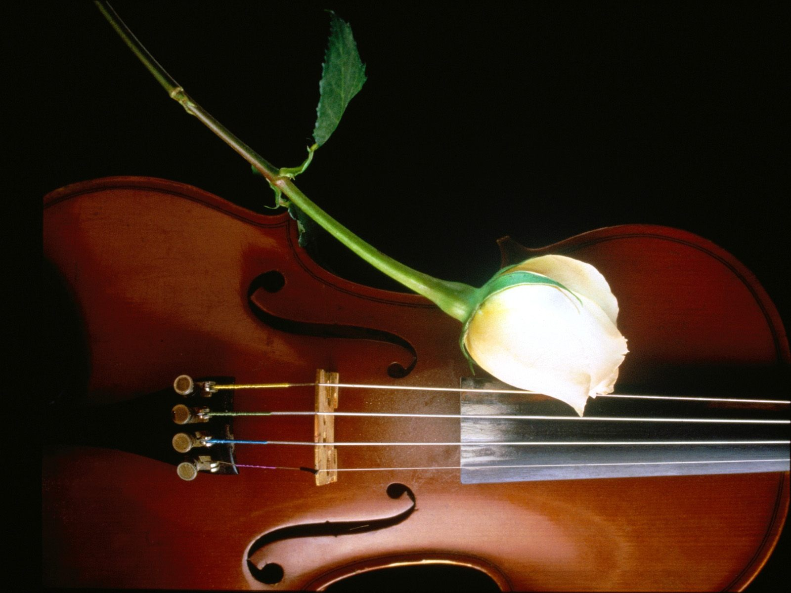 Instruments Of Beauty Wallpaper Flowers Nature Wallpapers
