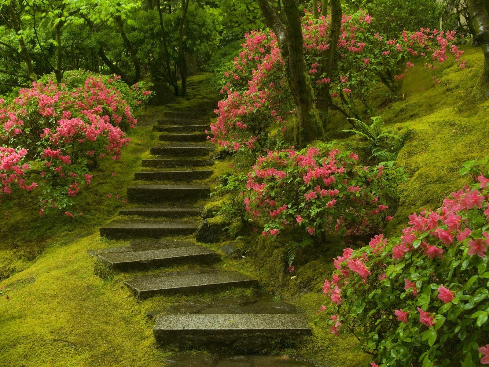 Japanese Garden Washington Park Wallpapers