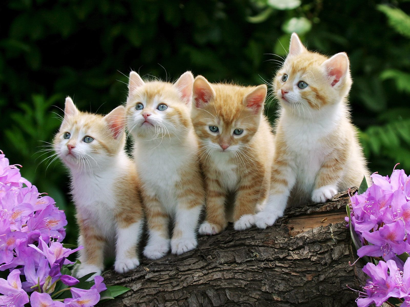 Cute kitty Wallpaper Cats Animals Wallpapers in format for