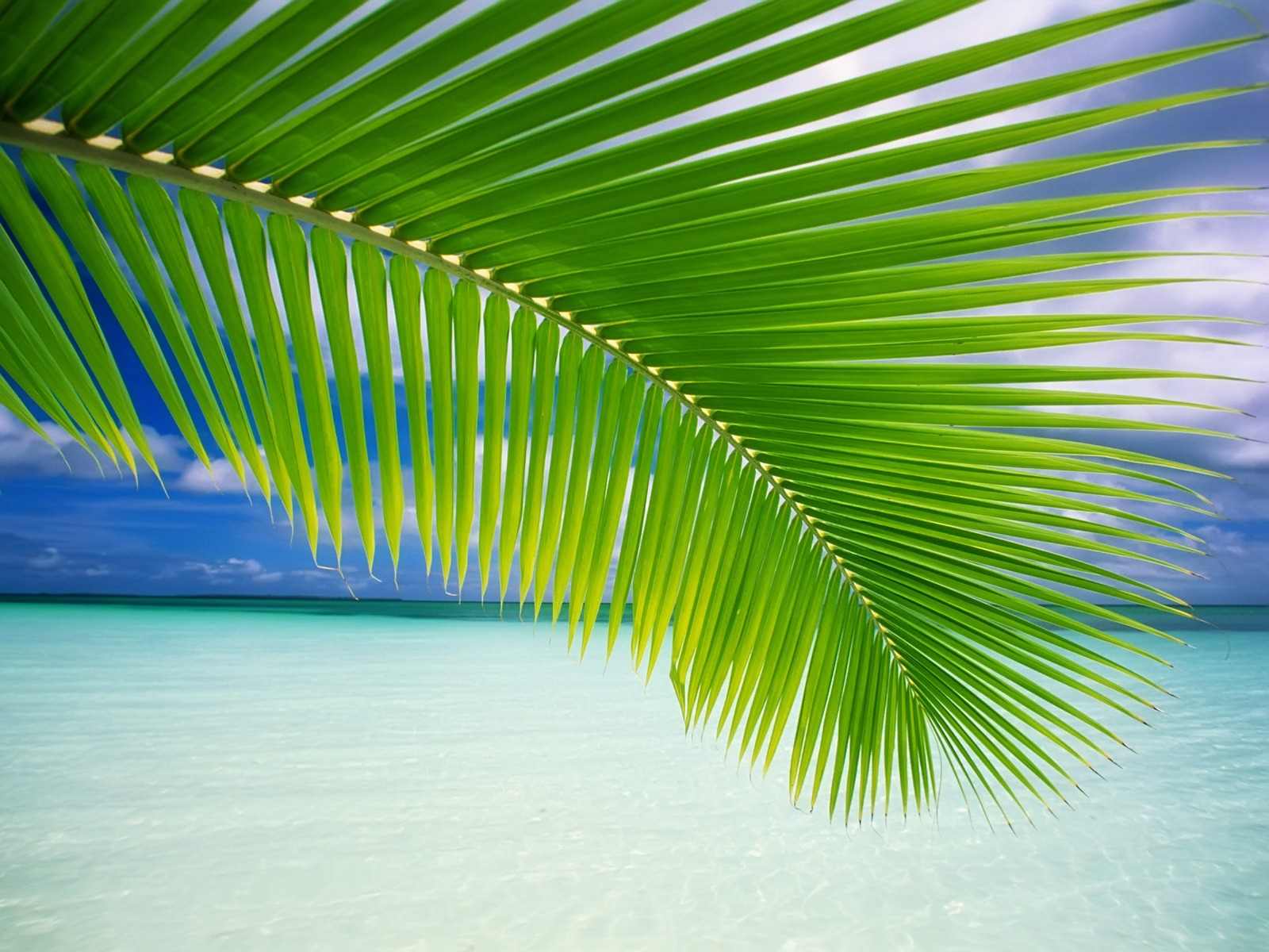 palm tree wallpaper beaches nature wallpapers in jpg format for