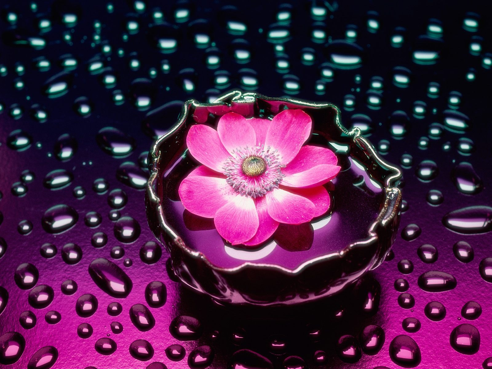 Petals And Water Wallpaper Flowers Nature Wallpapers In Jpg Format