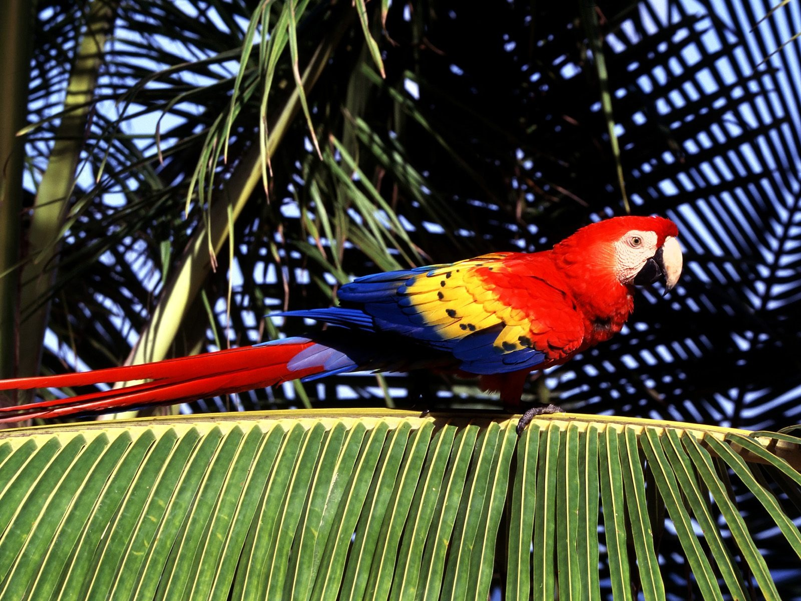 Parrot Wallpaper Wallpapers Browse