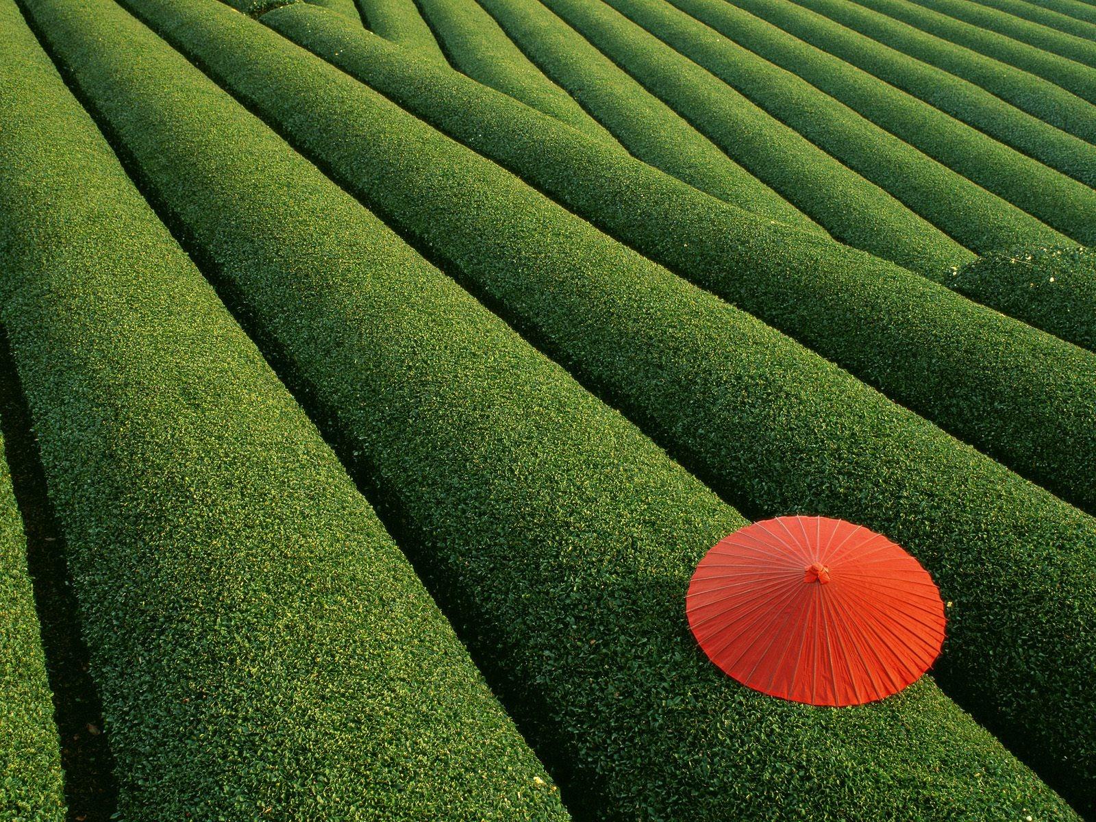 japan hintergrundbilder kostenlos