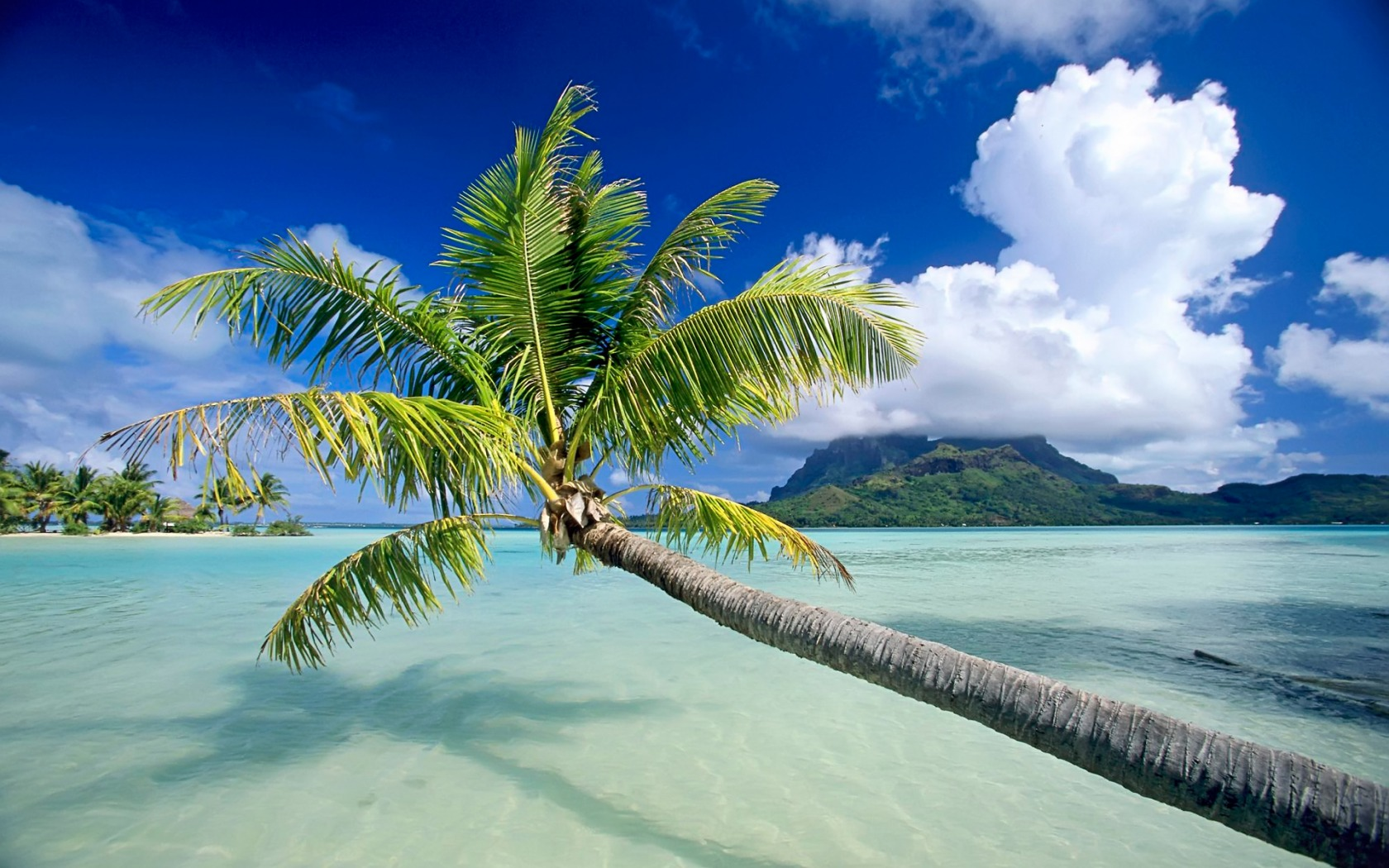 The 15 Best Tropical Beaches In The World | Bora bora, Bora bora ...
