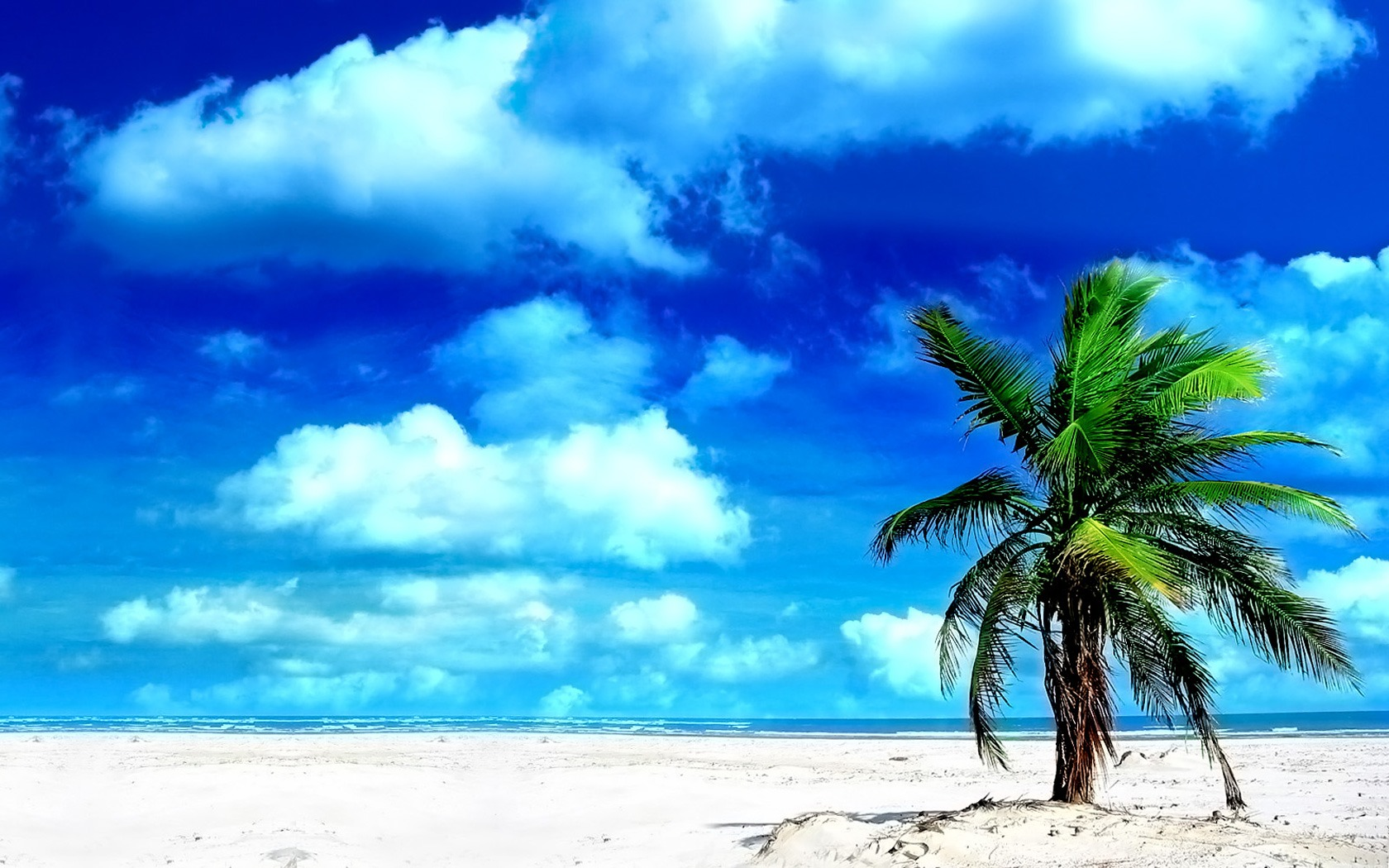 Simple Wallpaper Mac Palm Tree - palm_tree_wallpaper_beaches_nature_1441  Gallery_296155.jpg