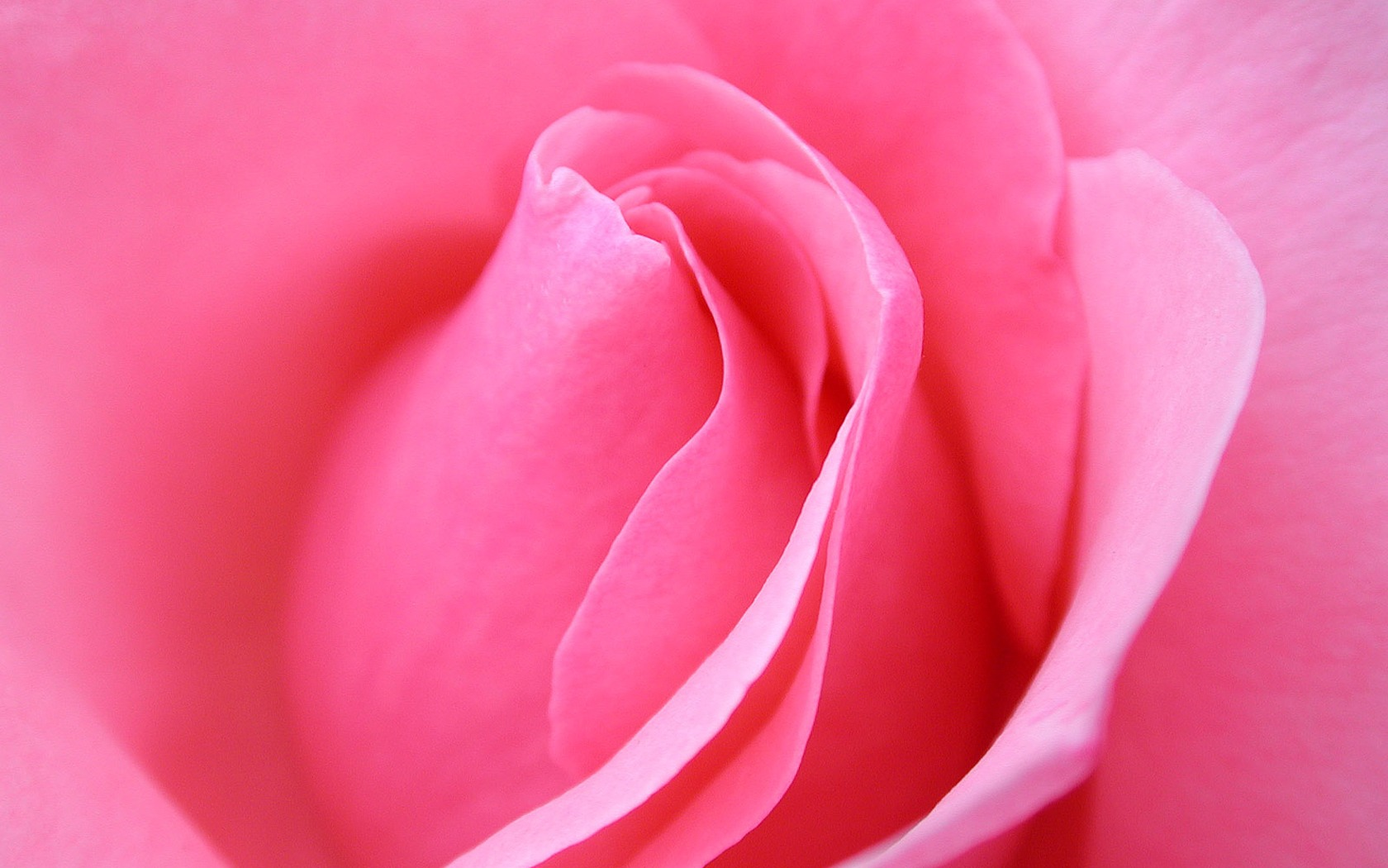 Pink rose macro wallpaper flowers nature wallpapers in jpg format pink rose macro wallpaper flowers nature wallpapers mightylinksfo