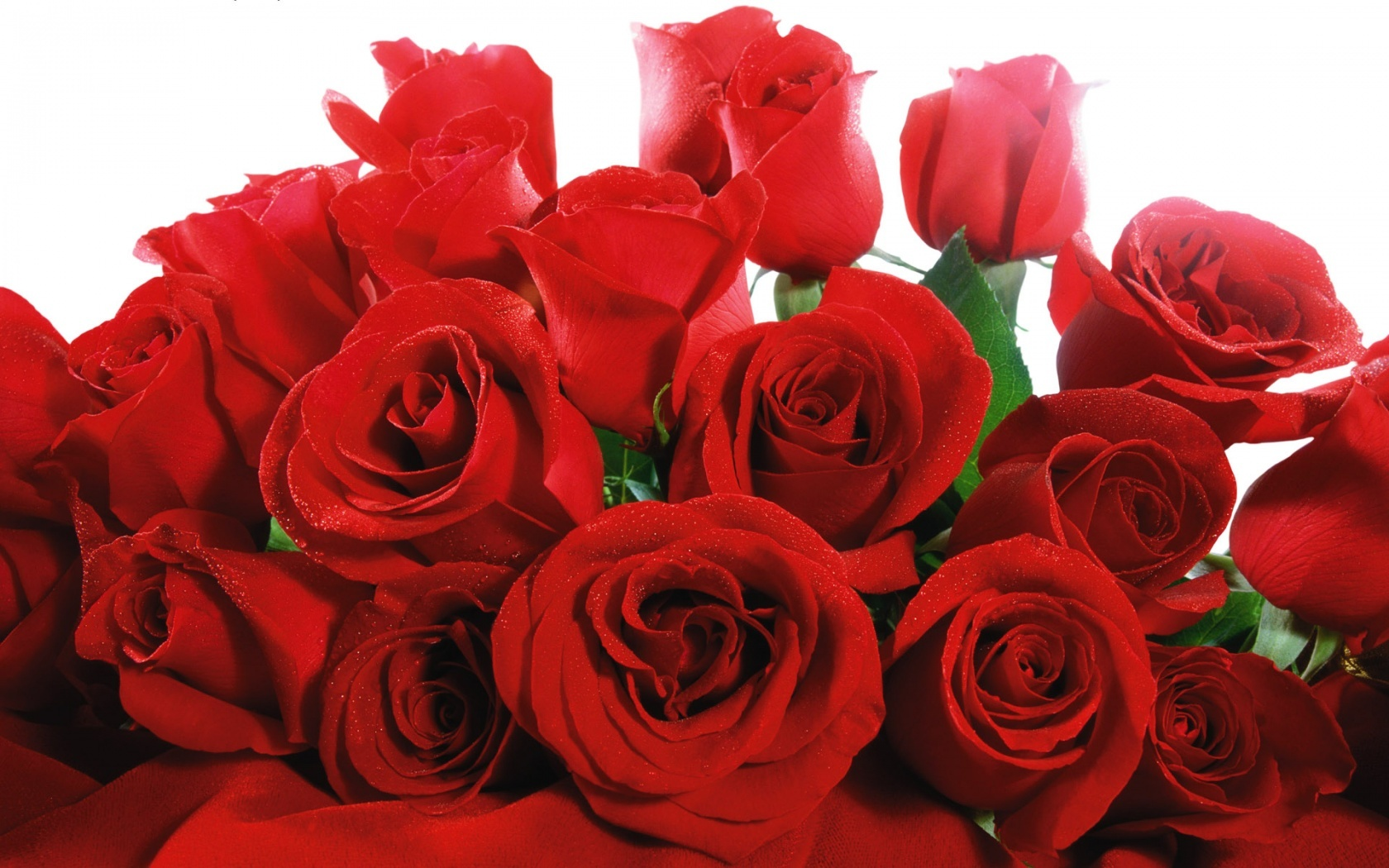 wallpaper rose wallpapers for free download about 3 095 wallpapers