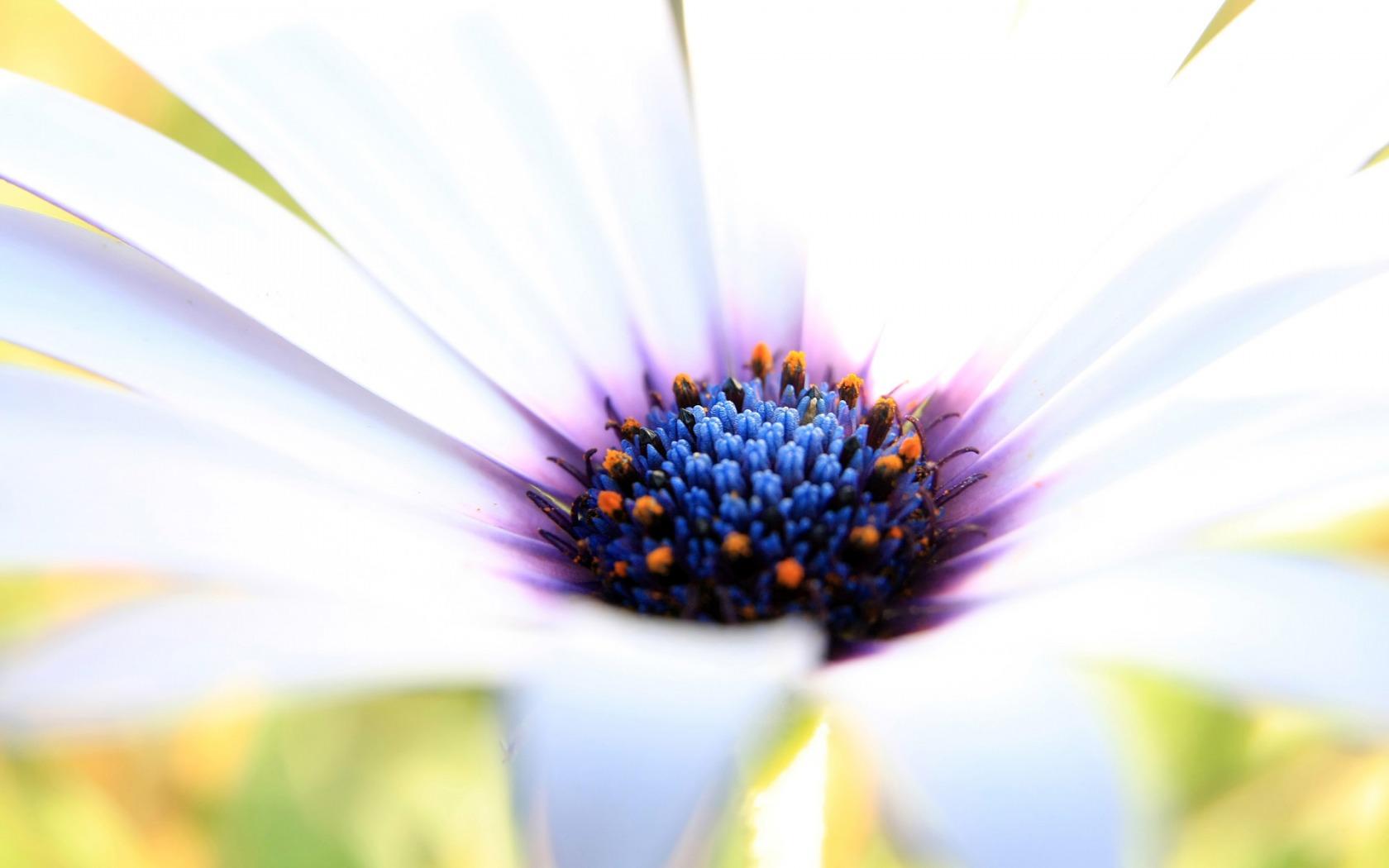 Amazing Wallpaper High Resolution Flower - white_flower_macro_wallpaper_flowers_nature_1307  Collection_429177.jpg