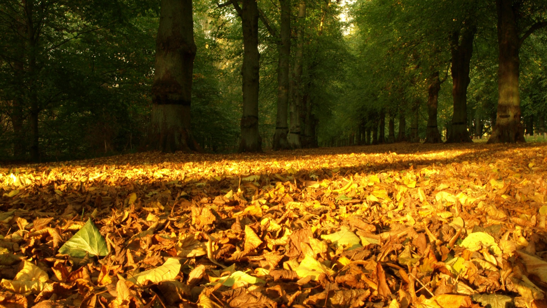 Autumn Leaves Carpet Wallpaper Autumn Nature Wallpapers in