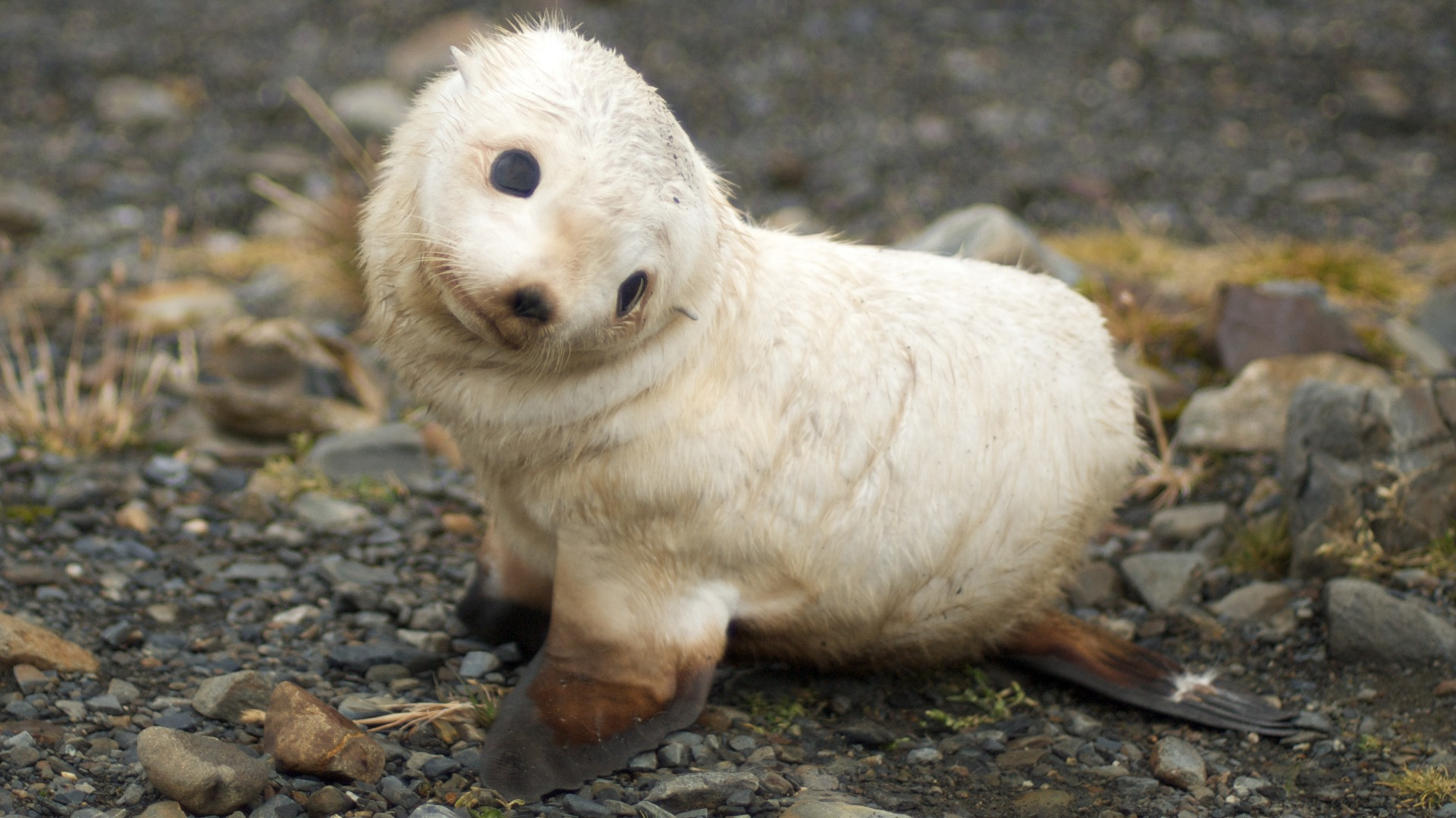 Baby Seal Wallpaper Seals Animals Wallpapers In Jpg Format For Free Download