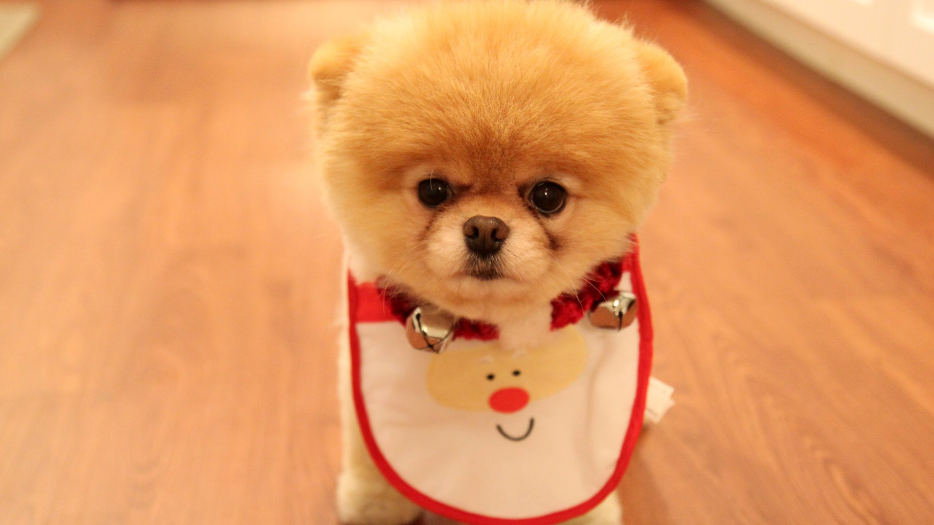 Must see Pomeranian Anime Adorable Dog - cute_dog_christmas_11054  Graphic_293536  .jpg