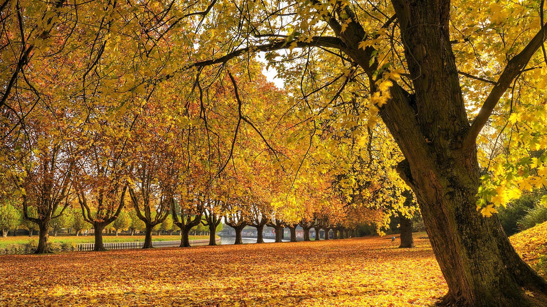 Golden Autumn Wallpaper Autumn Nature ...