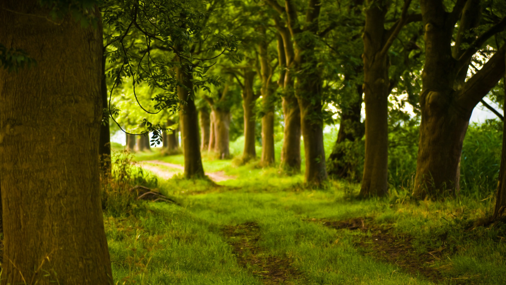magical forest wallpaper landscape nature wallpapers in jpg format