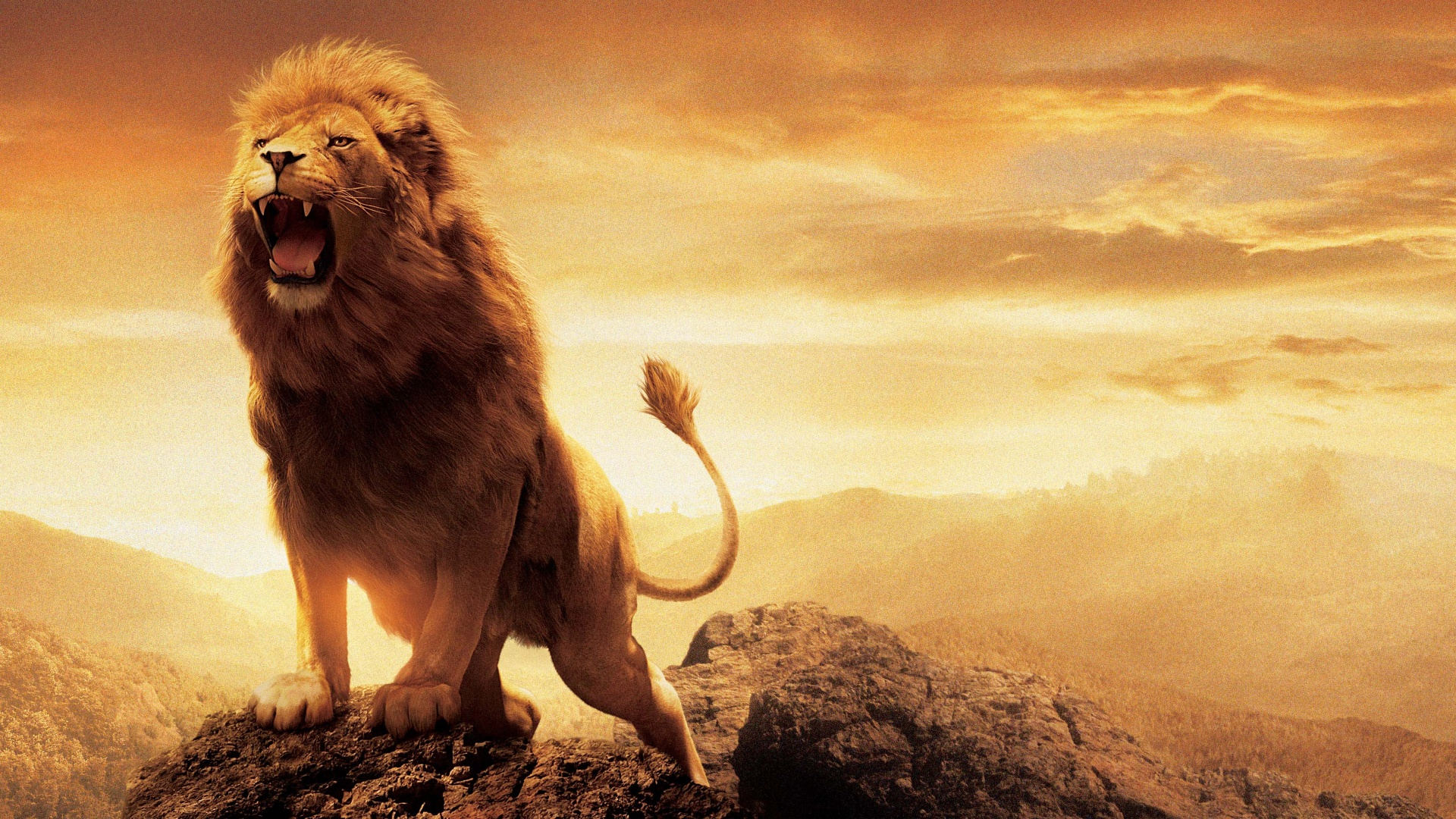 Narnia Lion Aslan Wallpapers