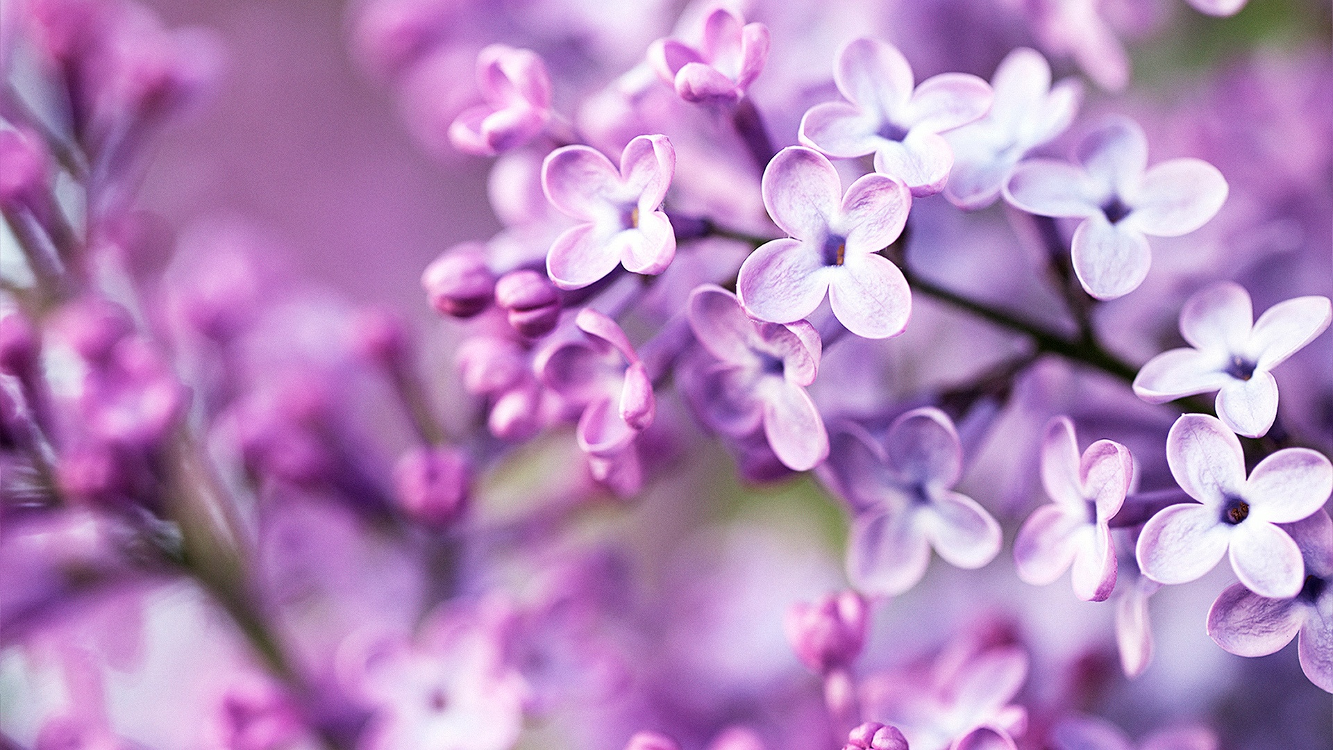 Spring purple flowers wallpapers in jpg format for free download spring purple flowers wallpapers mightylinksfo