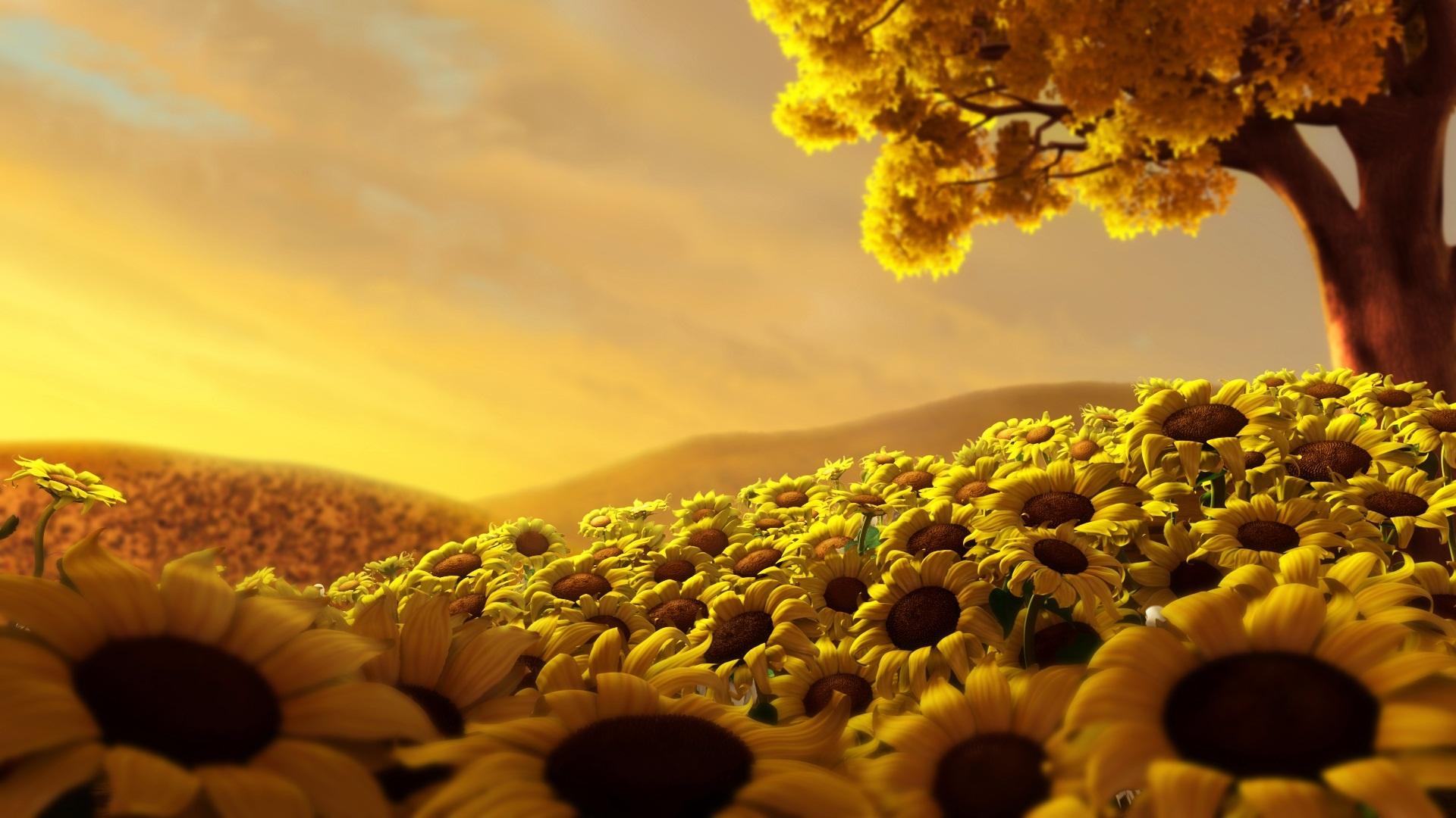 Sun Flower World HD Wallpapers