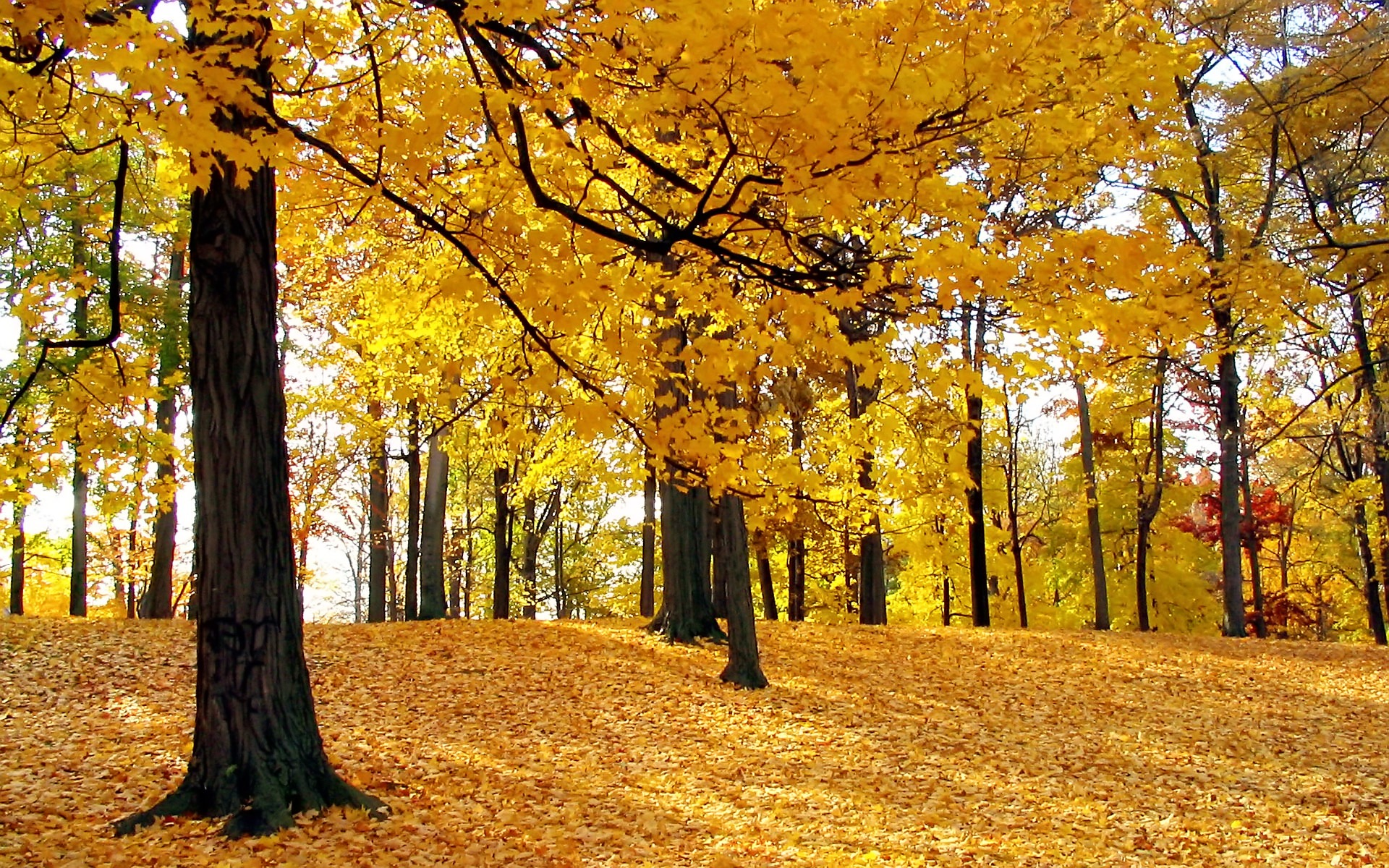 Nature wallpaper autumn trees wallpapers for free download about