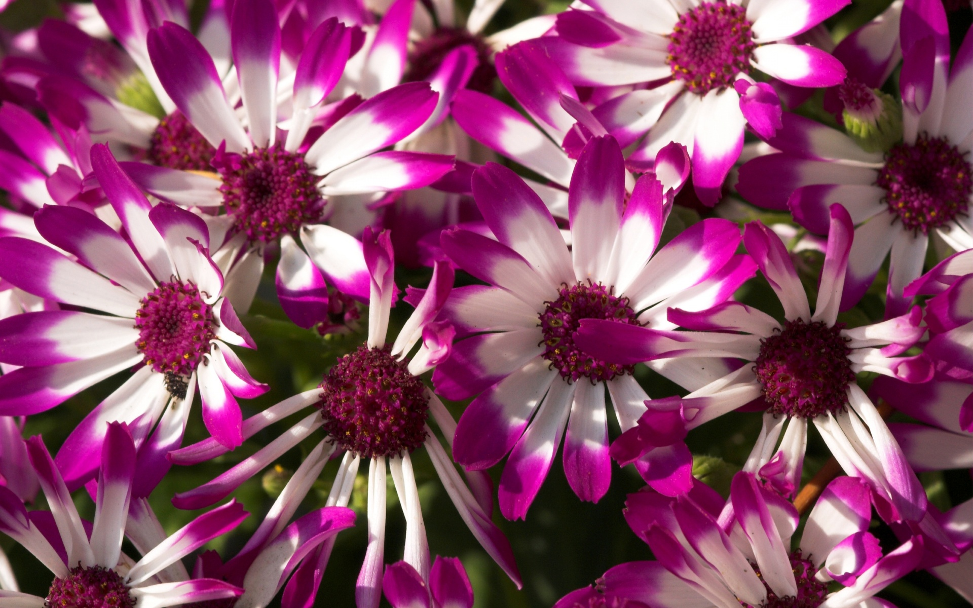 beautiful purple flowers wallpapers in jpg format for free download, Beautiful flower