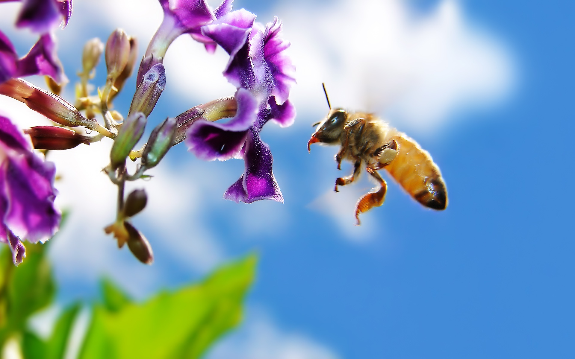 Bugs: Flowers Beautiful Bees Bee Macro Nature Up Black Photography ...