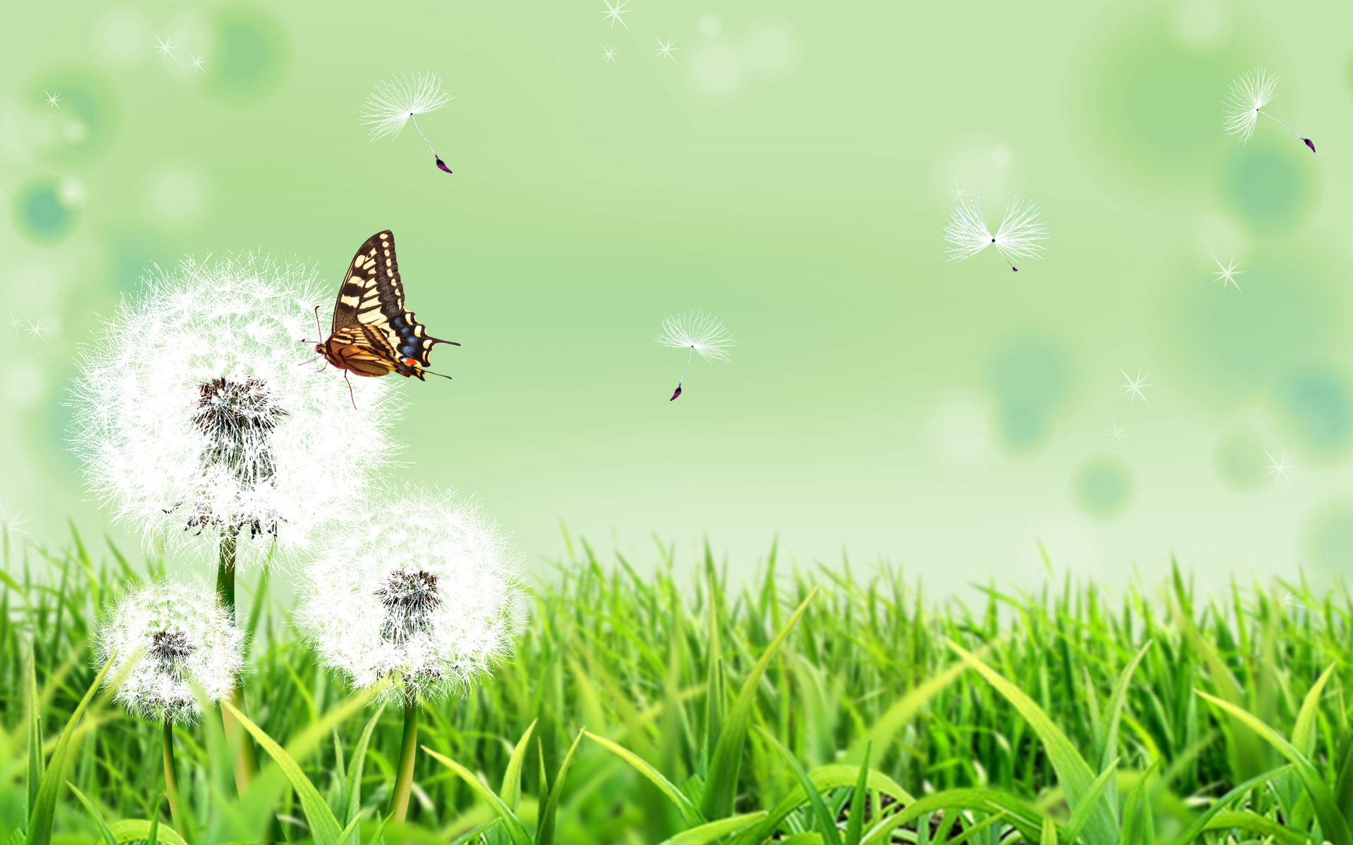 Wallpaper download pic - Butterfly Nature