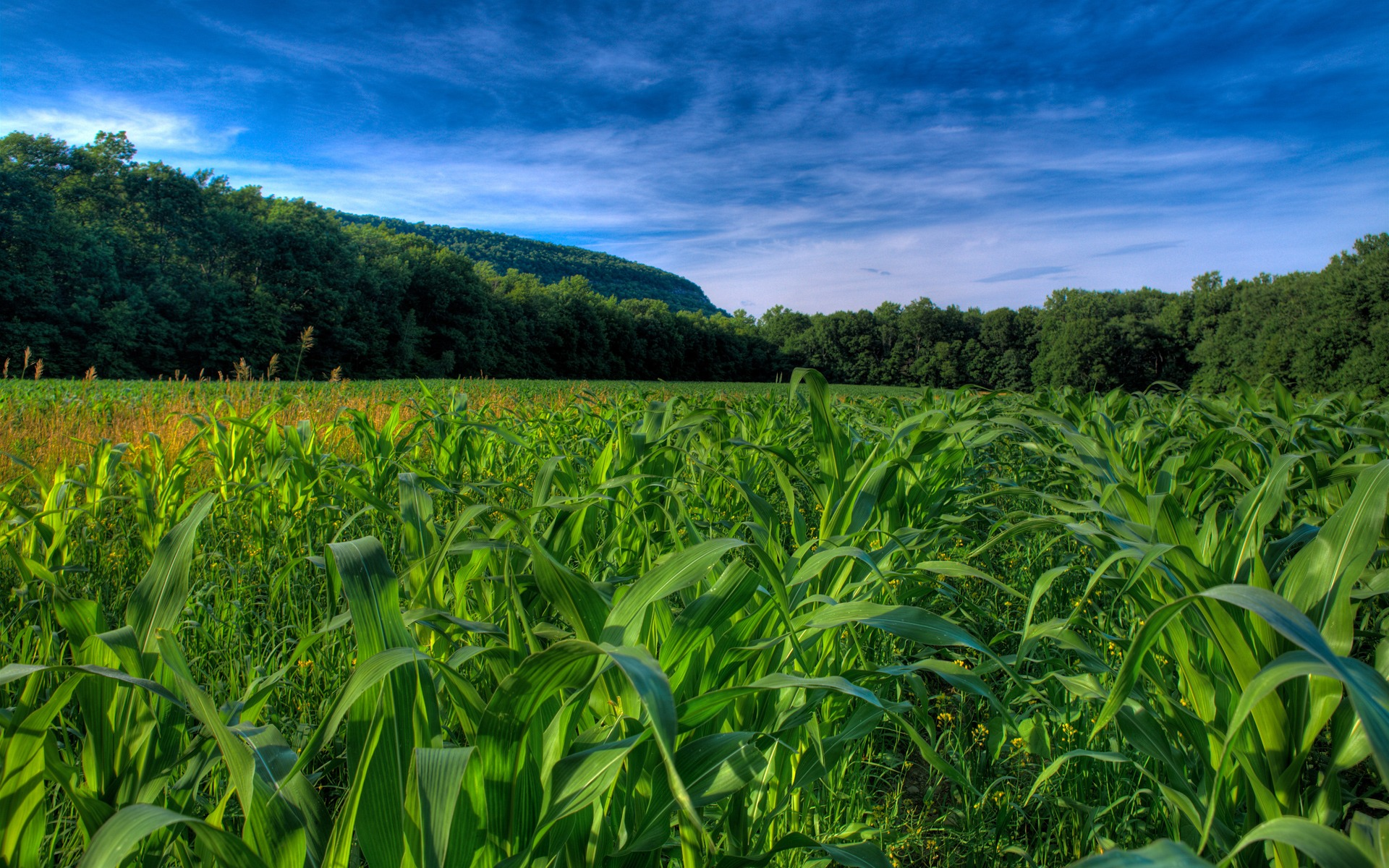 Fields Wallpapers, Images, Photos, Pictures &amp- Pics #fields ...