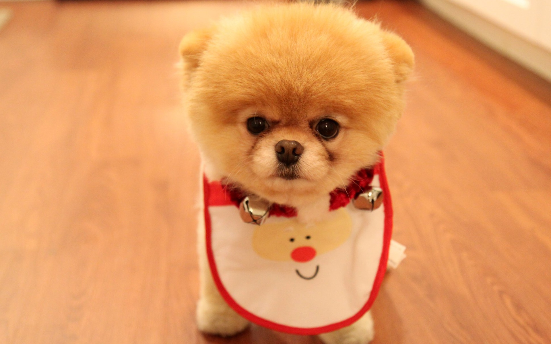 cute dog christmas wallpapers in jpg format for free download