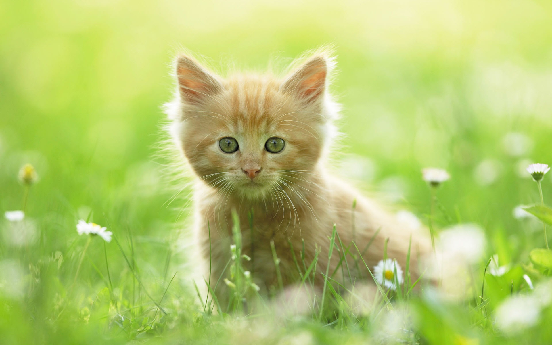 cute animal wallpaper wallpapers for free download about 3 668