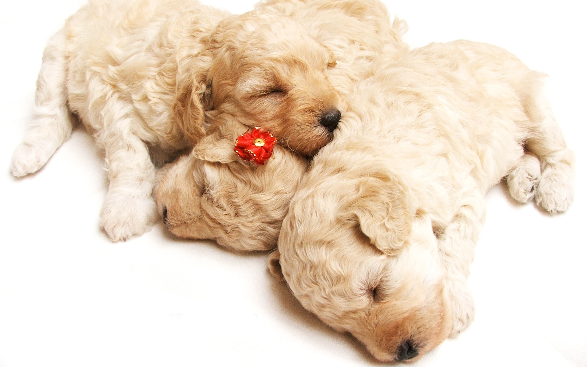 Cute Sleeping Puppies Wallpapers In Jpg Format For Free Download